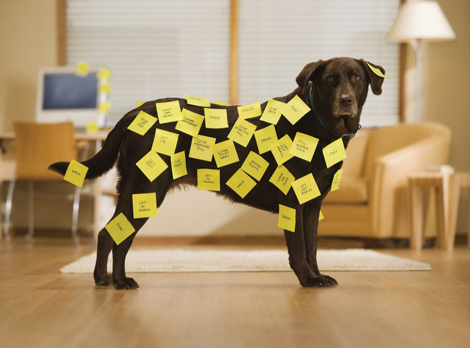 051202_Post-It Note Dog