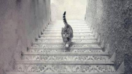 laiptai-link-pelno-5-treideriu-lygiai-pagal-billa-willjamsa