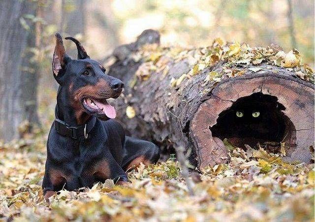 didelių šunų prekybos strategija bendrovė įsigijo akcijų pasirinkimo sandorius